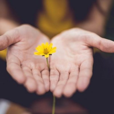 yellow flower between two hands on donate page